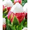 Bulbi Lalele Ice Cream (Tulip)