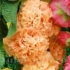 Bulbi Nalba Orange Shade (Alcea)