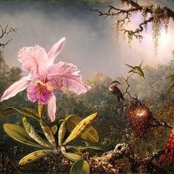 Istoria Orhideelor partea 2