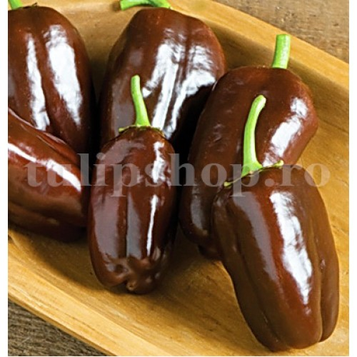 Pachet XXL Seminte ardei gras Sweet Chocolate 1000buc.