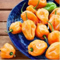 Seminte ardei iute Habanero Orange 50buc.