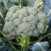 Seminte brocoli Waltham 400buc.