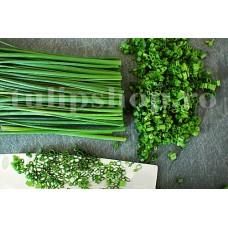 Seminte cepsoara Chives Fine Leaf 500buc.