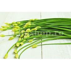 Seminte cepsoara Garlic Chives 500buc.