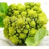 Seminte conopida Verde di Macerata 400buc.