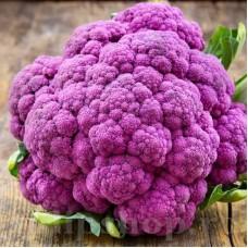 Seminte conopida Violetto di Sicilia 400buc.