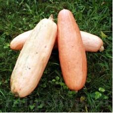 Seminte Dovleac Pink Banana Jumbo 30buc.