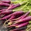 Seminte morcov Cosmic Purple 500buc.