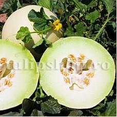 Pachet XXL seminte pepene galben Honeydew 1.000buc.