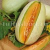 Seminte pepene galben Melba 100buc.