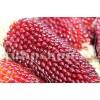 Seminte porumb floricele Strawberry Corn 100buc.