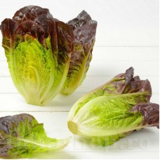 Seminte salata Red Romaine Cos 1000buc.