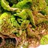 Seminte salata Sanguine Amelioree 1000buc.