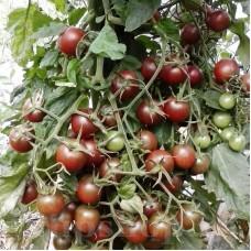 Seminte tomate Black Cherry 200buc.