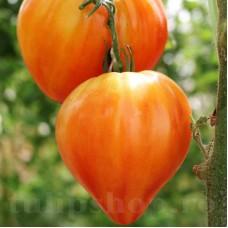 Pachet XXL seminte tomate Inima de Bou Orange 1000buc.