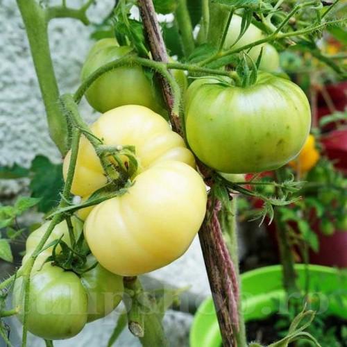 Pachet XXL seminte tomate White Beauty 2000buc.