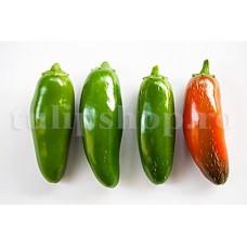 Seminte ardei iute Hot Jalapeno 100buc.