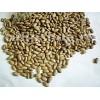Seminte fasole Aurie de Bacau 30buc.