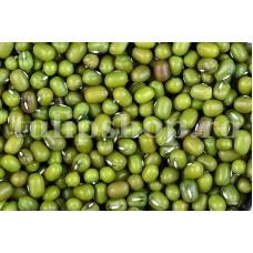 Seminte fasole Mung 100buc.