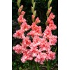 Bulbi Gladiole You Two Frizzle