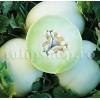 Seminte pepene galben Honeydew 100buc.