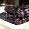 Seminte porumb dulce Aztec Black 30buc.