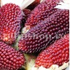 Pachet XXL seminte porumb floricele Strawberry Corn 1000buc.