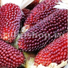 Seminte porumb floricele Strawberry Corn 100buc.