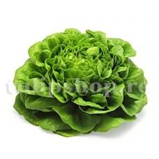 Pachet XXL seminte salata May Queen 20.000buc.