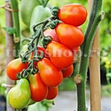 Seminte tomate Red Fig 100buc.