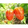 Seminte tomate Speckled Roman 100buc.