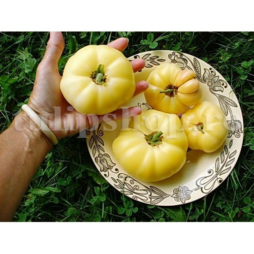 Seminte tomate White Beauty 200buc.